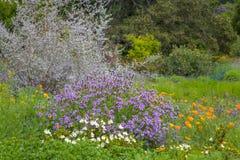 Üppiges Feld von Kalifornien-Wildflowers und von Affe-Blumen Lizenzfreie Stockfotografie