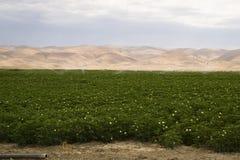 Üppiges grünes Ackerland-Landwirtschafts-Feld Kalifornien Vereinigte Staaten Lizenzfreies Stockfoto