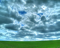 Üppiges grünes Feld Stockbild