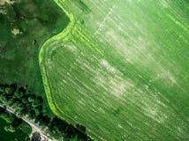Üppiges grünes Feld mit Straße Lizenzfreie Stockbilder