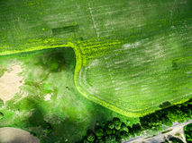 Üppiges grünes Feld mit Straße Stockbilder