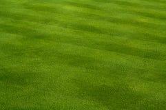 Üppiges grünes Gras Lizenzfreies Stockbild