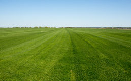 Üppiges grünes Gras mit Hintergrund des blauen Himmels lizenzfreie stockfotos