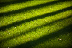 Üppiges grünes Gras mit langen diagonalen Schatten der Bäume Lizenzfreie Stockfotos