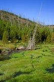 Üppiges grünes Gras und Strom Stockfotos
