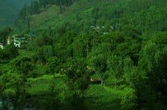 Üppiges grünes Kaschmir-Dorf-Pahalgam Stockbilder
