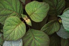 Üppiges grünes Laub von oben Stockfotografie