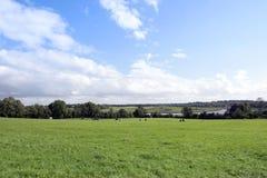 Üppiges grünes Longford-Ackerland Lizenzfreies Stockbild