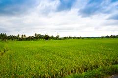 Üppiges grünes Reisterrassenfeld mit Berg und bewölktem blauem Himmel stockfoto
