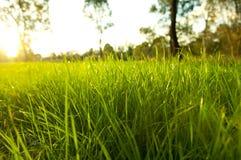 Üppiges Gras Stockfotografie
