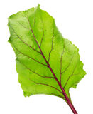 Ćwikłowy liść odizolowywający na białym tle Zdjęcie Stock