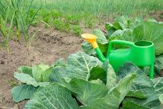 łóżka uprawiają ogródek warzywa Obraz Stock