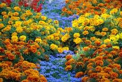łóżko barwiący kwiat zdjęcie royalty free