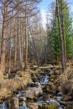 Łóżko halny strumień i drzewa w lesie na skalistym skłonie, Altai, Rosja zdjęcia stock