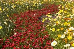 łóżko kwiat obrazy stock