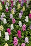 Łóżko kwiaty fotografia royalty free