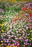 Łóżko kwiaty Zdjęcia Royalty Free