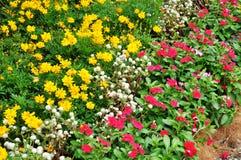 Łóżko kwiaty Obraz Royalty Free