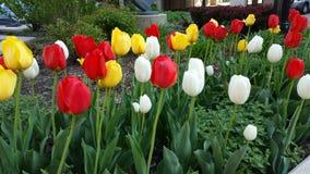 Łóżko kwiaty czerwony kolor żółty i biel Fotografia Stock