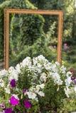 Łóżko kwiaty petunia w parku przed ramą Obrazy Royalty Free