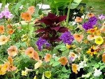 Łóżko stubarwni kwiaty w mój ogródzie obrazy stock