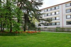 Łóżko tulipany, gazon i sosny w obszarze zamieszkałym, Zdjęcie Royalty Free