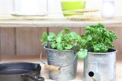 łóżkowa koperu ogródu kuchnia obrazy royalty free