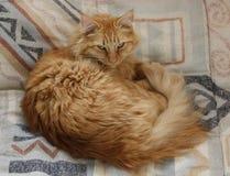 łóżkowy kot obrazy stock