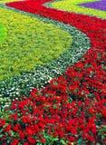 łóżkowy kwiat Zdjęcia Stock