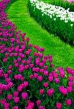 łóżkowy kwiat Fotografia Royalty Free
