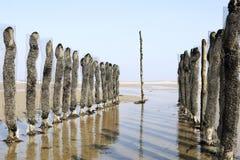łóżkowy mussel Fotografia Royalty Free
