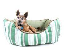 łóżkowy pies Fotografia Royalty Free