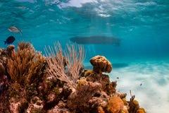 Łódź cumująca w tropikalnej lagunie Zdjęcie Stock