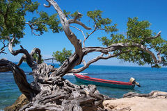 Łódź i drzewo w Jamajka Zdjęcie Royalty Free