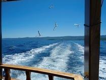 Łódź i seagulls Fotografia Royalty Free