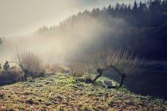 Łódź pod wierzbą w mgłowym ranku, pokojowy relaksu czasu wolnego pojęcie Zdjęcia Royalty Free