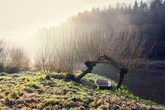 Łódź pod wierzbą w mgłowym ranku, pokojowy relaksu czasu wolnego pojęcie Obraz Stock
