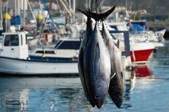 Łódź rybacka rozładunkowy tuńczyk fotografia royalty free
