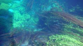łódkowata wycieczka, płochy, dziwaczny podwodny azmak rzeka, indyk zbiory