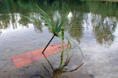 łódkowatej dzieci wyspy osamotniona palma taki drzewo Zdjęcie Royalty Free
