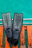 łódkowaty flipper obrazy royalty free