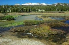 łąk wiosna tuolumne Yosemite Obraz Royalty Free