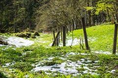 łąka śnieg Obrazy Stock