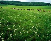 łąka Obraz Stock