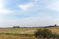 Łąka cakle w zatoce Somme Zdjęcia Stock