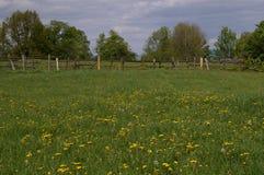 Łąka, dandelions ogrodzenie w tle Fotografia Royalty Free