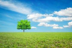 Łąka, drzewo i niebo, koncepcja ekologii obrazów więcej mojego portfolio obraz royalty free