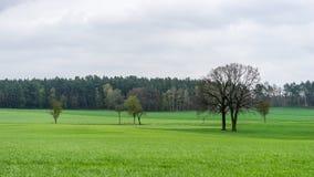 Łąka i drzewa Obrazy Royalty Free