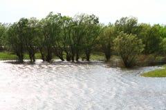 Łąka i drzewa zalewaliśmy po długiego okresu czasu dżdżysta pogoda w wiośnie obraz royalty free