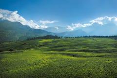 Łąka I Góry Fotografia Royalty Free